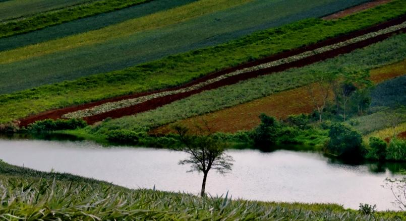 国家发文推动农垦改革,农垦如何飞起来