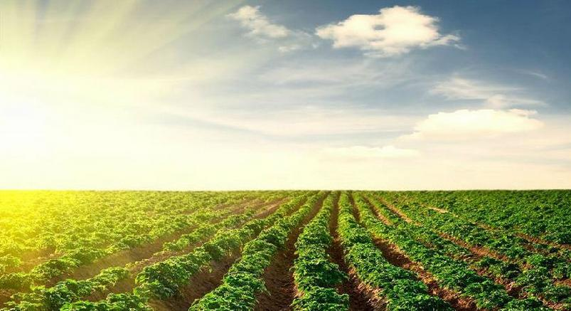 警示!当下中国农业最棘手的10大难题