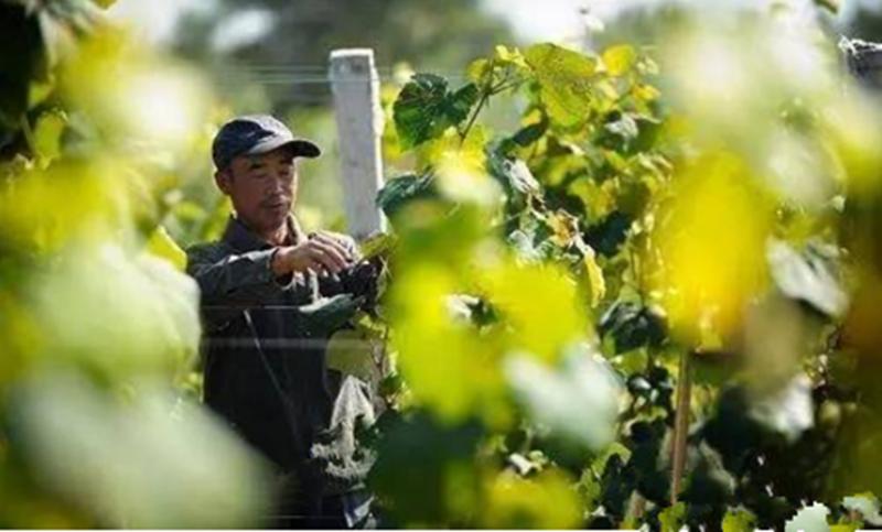 干货分享 2017年,新农人如何玩转订单农业?