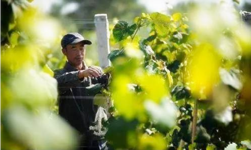 干货分享|2017年,新农人如何玩转订单农业?