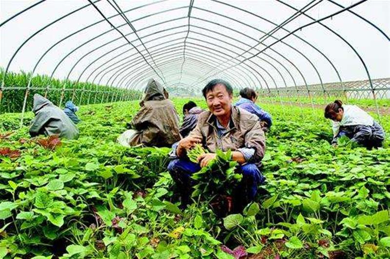 农业老板:做领导,别想管死员工!