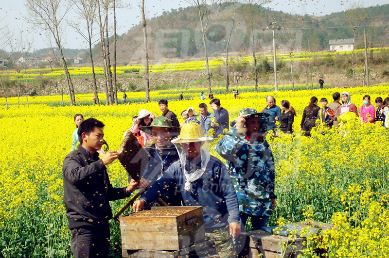 下乡做农业,必须知道5大误区7大掘金机会@农村电商人