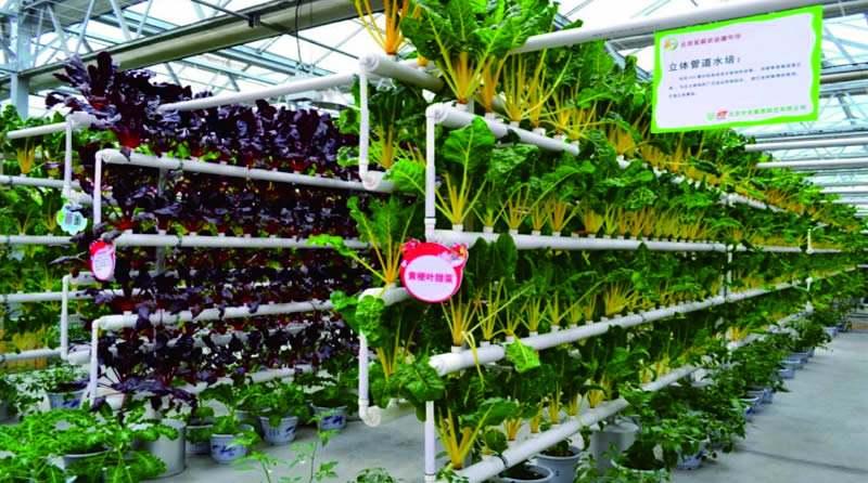 大干货|农业ppp如何投农业项目(看这一篇文章就够了)!