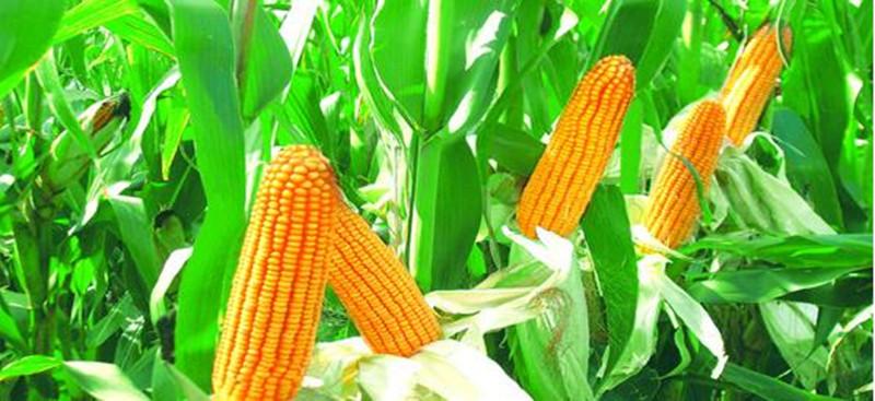 现代农业误区存在哪些误区,如何跳出?