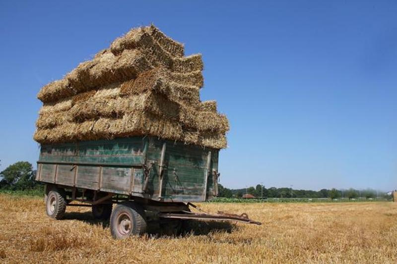 做农业要区分风险,加强自己的优势才能安稳赚钱