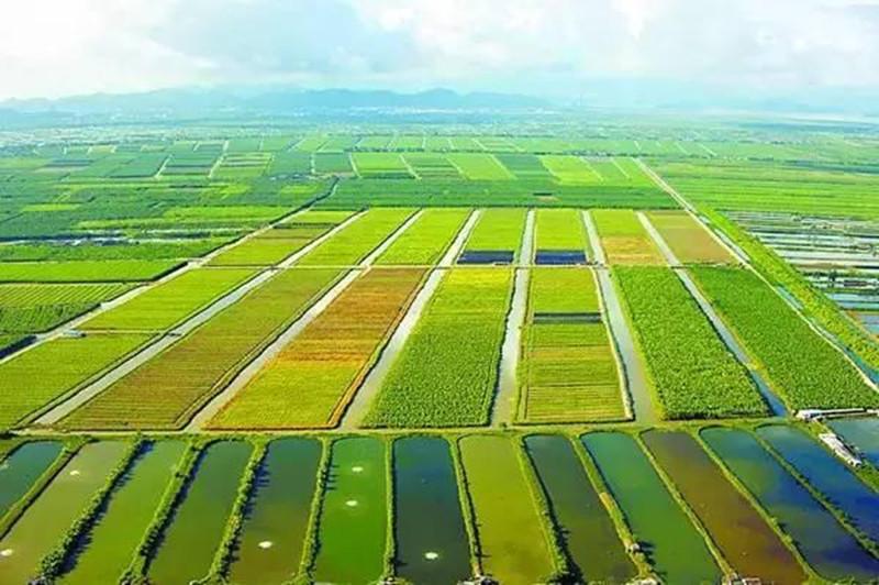 农业分散赚钱法,农民知道吗?