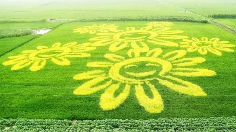 纯干货:创意农业的六种模式