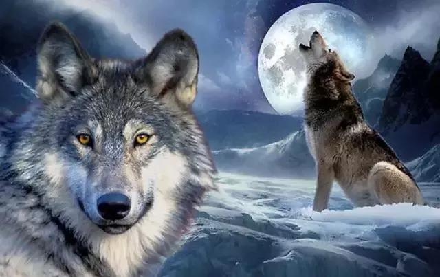 夜读|与狼成狼, 与猪成猪!