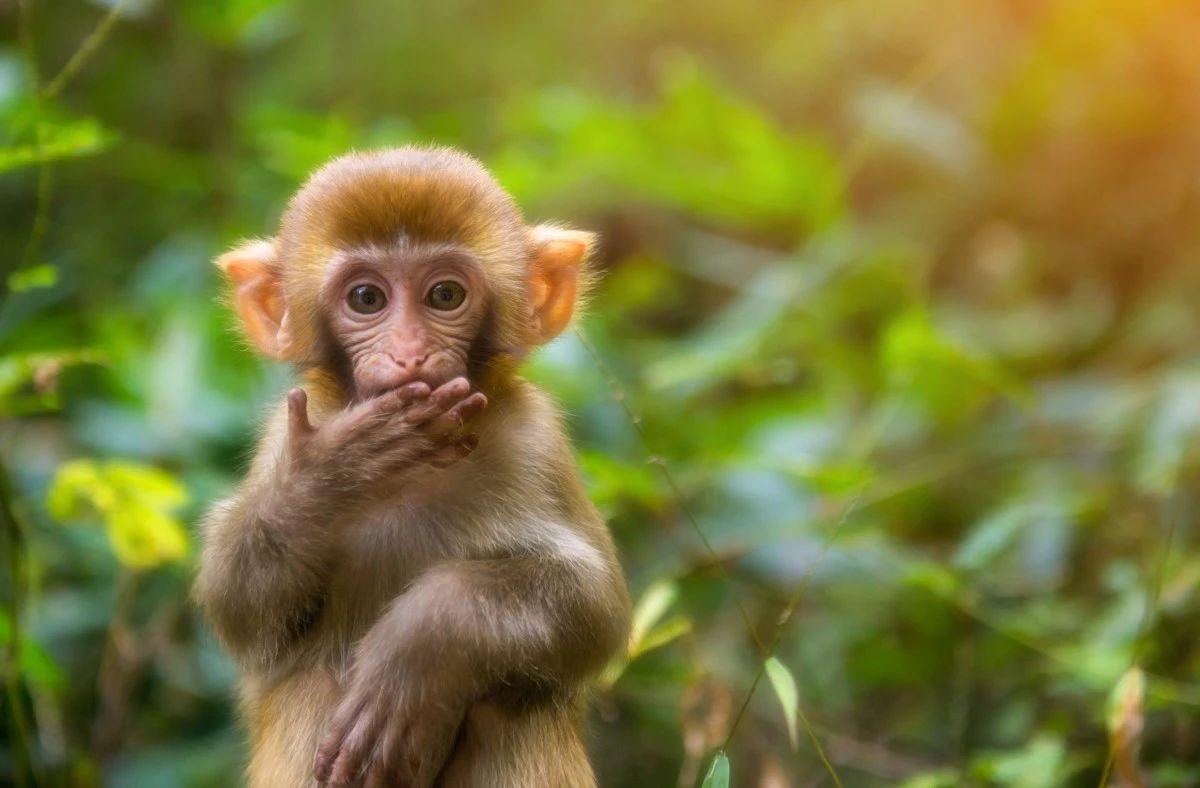 猴子管理法:如何避免自己忙死,下属闲死?