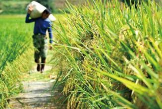 关于我国农业政策的十三个观点