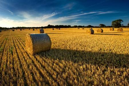 在农业圈工作的重点有哪些?(新农人必读)