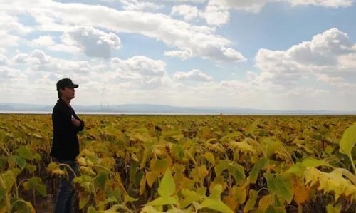 职业农民——未来农业新主人