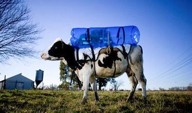 农牧行业百万经销商将何去何从?