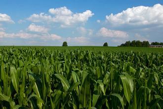 玉米补贴还不知道怎么领?看看这里给你答案!