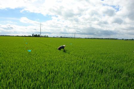 2017农业政策将出现什么样的重大改革?