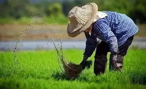 2017年国务院新政:18条支持政策即将落实,就是要让农民挣得更多!