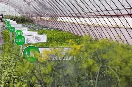 三农日报 农业种植现闭合产业链模式;未来农业商机在哪里;农业如何才能一直做下去?