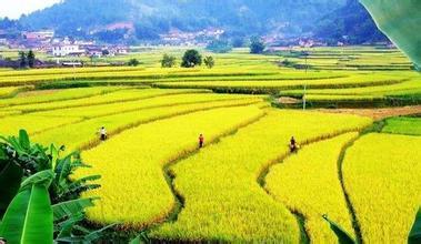 绿色农业 2017年,如何从绿色发展中掘金?