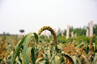 农业部:切实抓好春耕生产 持续推进结构调整