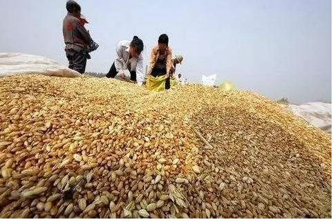 朱敏:发达国家现代化农业发展模式及对我国的启示