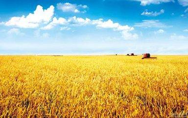 农业问题长期存在!如果我们连自己都跑不赢,还谈什么拯救天下
