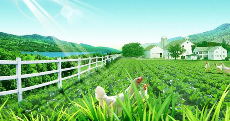 如何发力完善农业创新生态系统