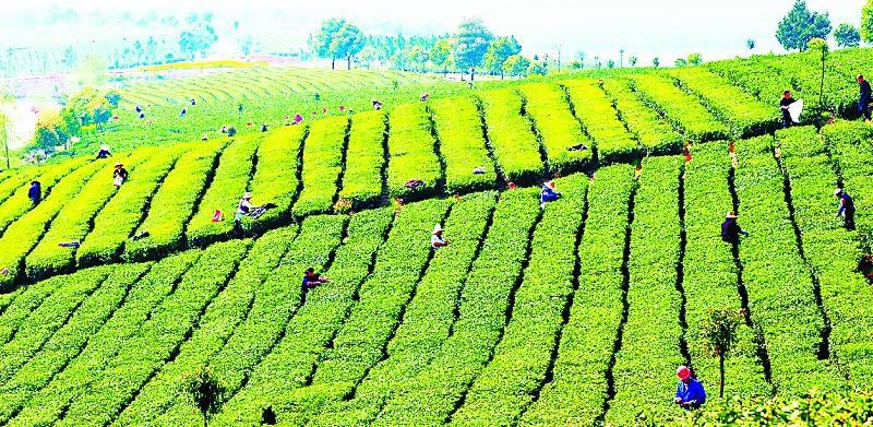 预测|农业现代化核心战略:从资源农业向资本农业跨越