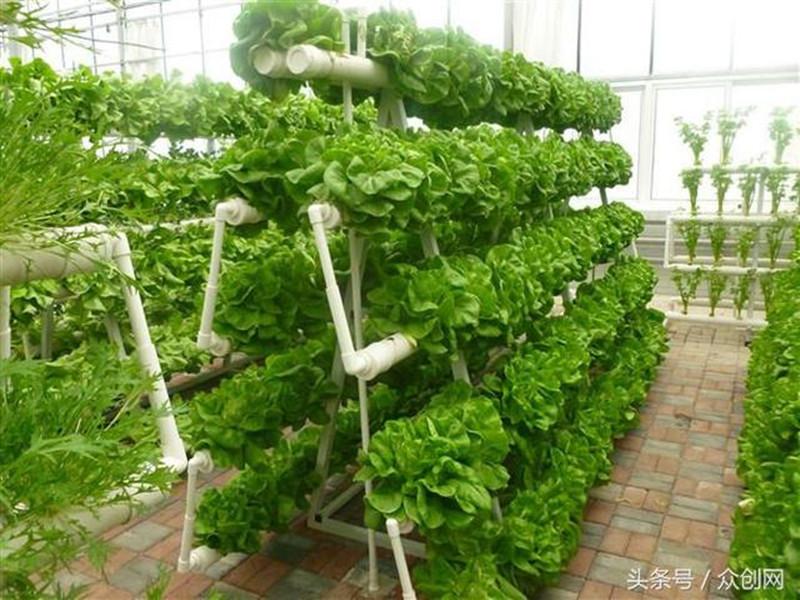 """蔬菜无土栽培技术成智慧农业发展""""新亮点"""""""
