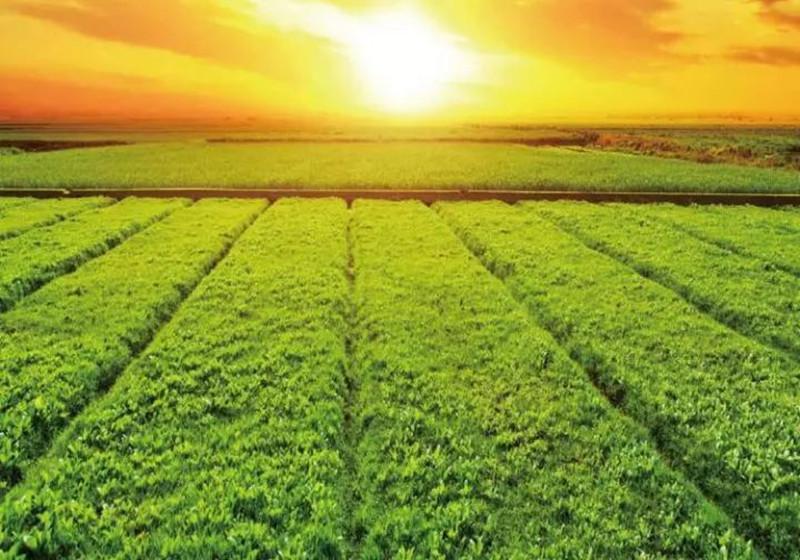 对话|佳格天地张文鹏:服务和价值是农业大数据公司存在的意义