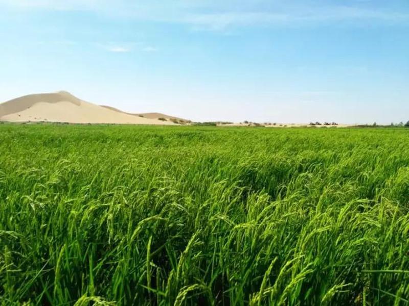 创业小黑板|10大新农业:未来农业生产大趋势!