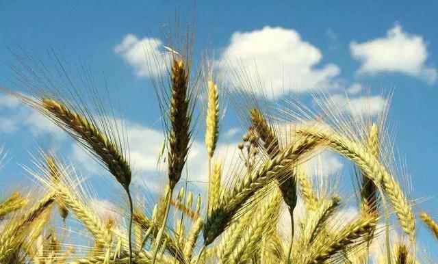 国务院农业政策:至2025年八大任务、四大新政策,农业发展新方向