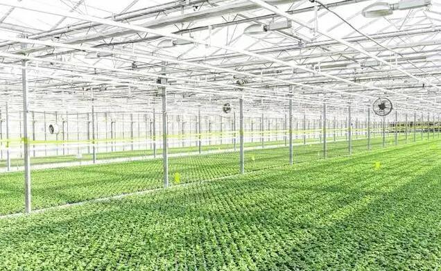 知识|想做设施农业,却不懂拿地问题?一篇文章为你解答清楚。