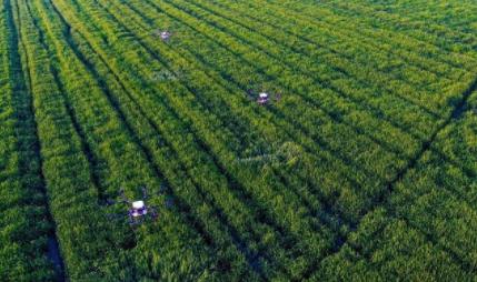 三农日报|基因编辑让农业进入新领域;中国农业航空产业是大产业