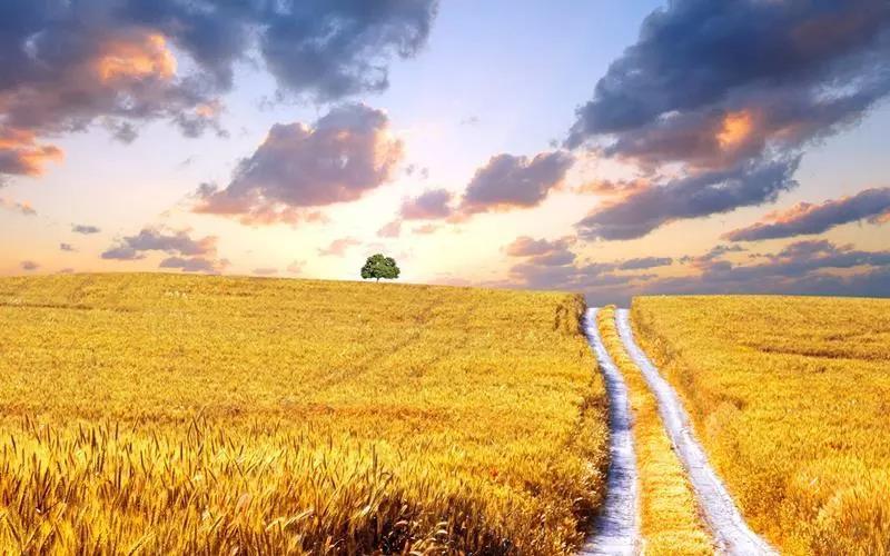 重磅|智慧农业:8个接地气的场景