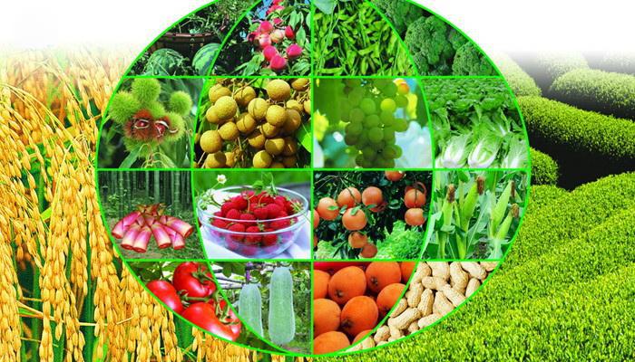 智慧农业百亿规模:看真格基金、京东、大北农、中粮、温氏的玩法
