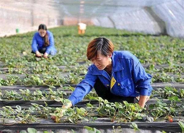 三农日报|未来农业方向是什么;马云才是最有情怀的商人 ;众多农资电商为何被关停