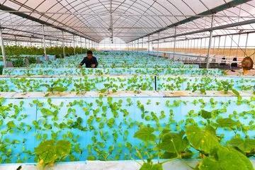 颠覆传统农业,年入百万的6个农业创新!