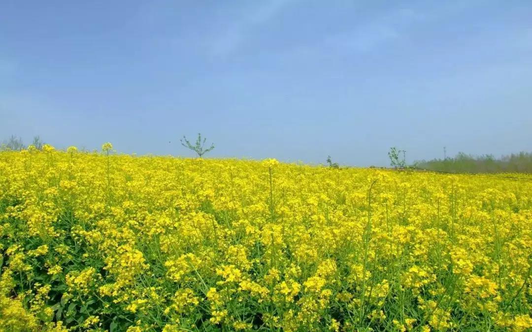 三农日报|大数据将会对智慧农业产生颠覆式的影响;马云:未来的农业是数据农业