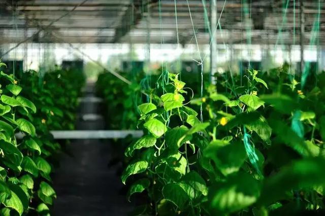 5G时代!中国农业效率更高、成本更低、赚钱更多