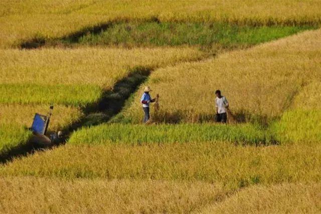 数字农业如何破解传统农业发展瓶颈?