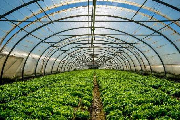 智慧订单农业 让农户和消费者都受益