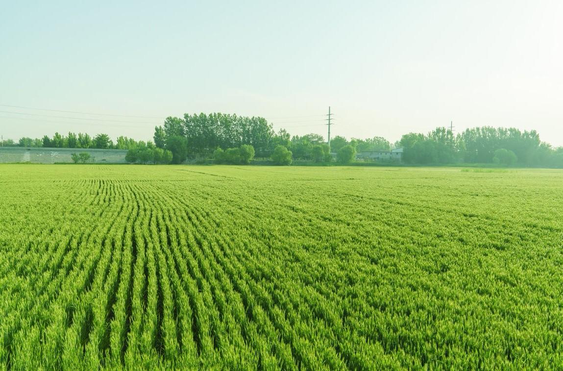 解读|智慧农业及大数据项目现状问题、成因及提升改进建议