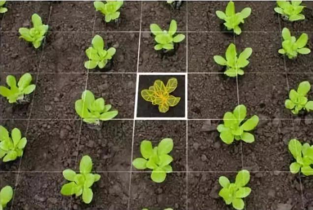 AI智能机器人在农业领域的应用案例