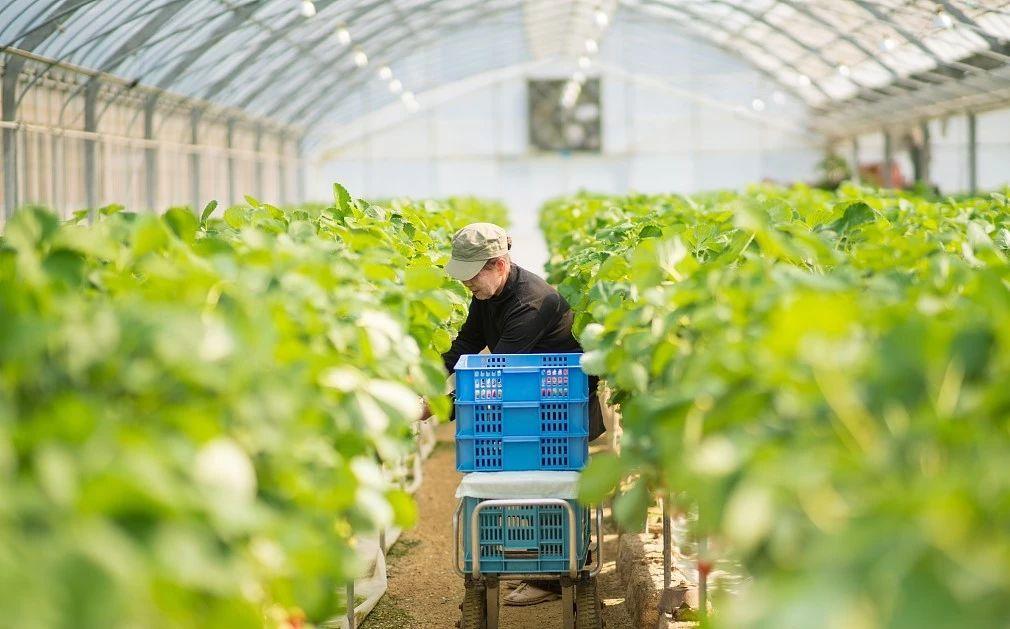 中国智慧农业还未成功:创新、商业模式、格局都存在问题