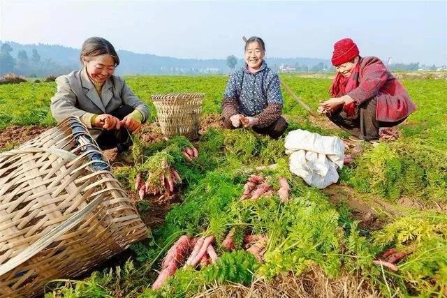 三农日报|数据显示:现代农业市场规模可达万亿级;小农户发展机遇:定制农业