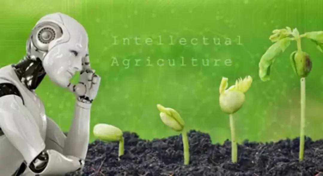 我国人工智能与农业领域深度融合现状与挑战