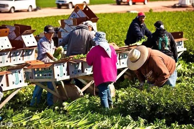 三农日报|智慧农业的成熟和蓬勃需要20年以上;农业需要进行商业化革新