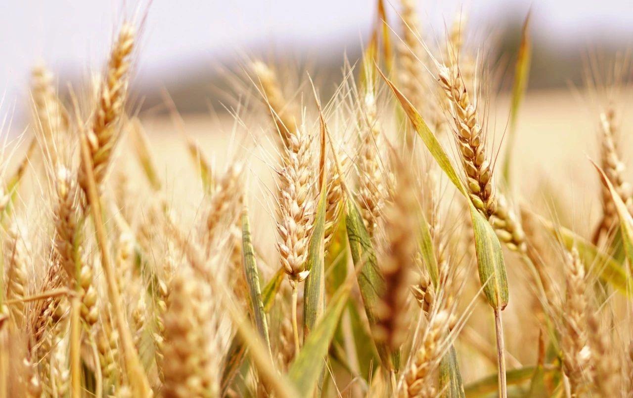 挑战与机遇并存丨智慧农业—中国农业发展的战略重器