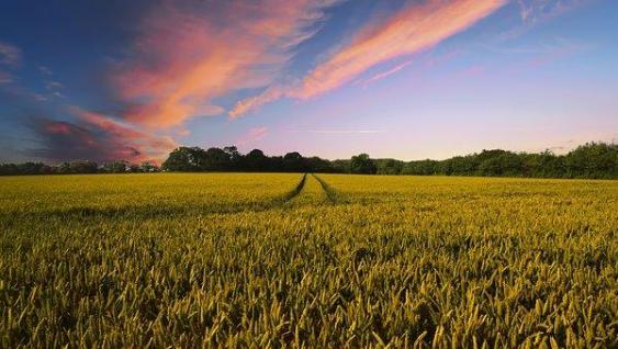 农业数字经济比重大幅提升 2025年将占农业增加值比重的15%