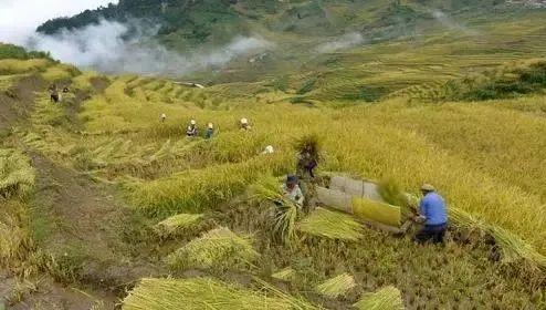 【案例】让智慧农业扎根田间助力脱贫,这家公司这么干